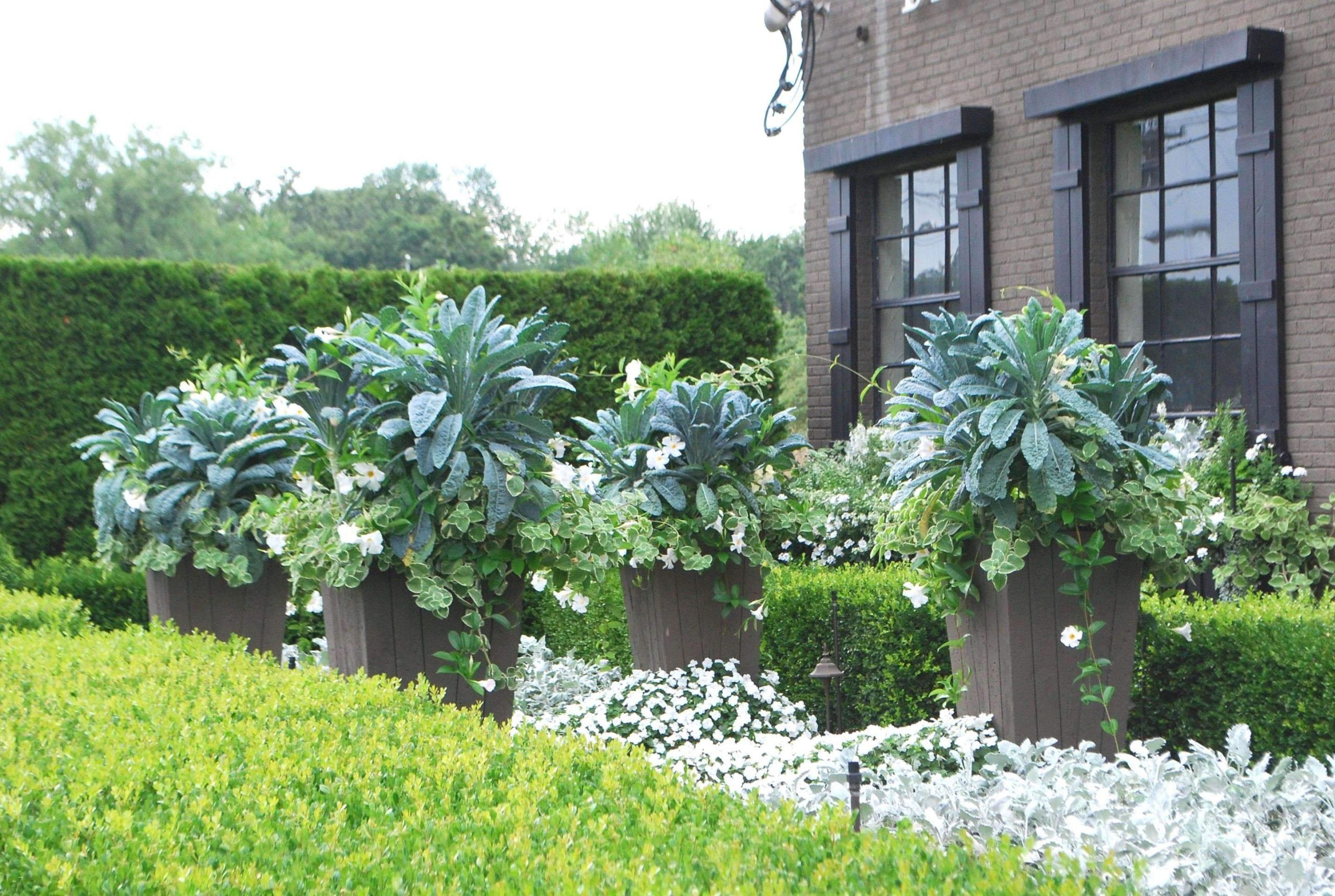 Giftige Pilze Im Garten Schön 39 Das Beste Von Sitzecke Im Garten Schön
