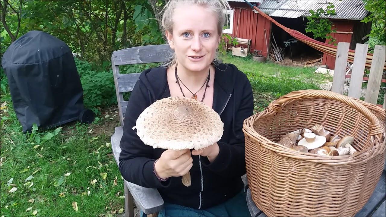 Giftige Pilze Im Garten Schön Pilze Sammeln Bestimmen Putzen & Zubereiten Achtung Vor Dem Gallenröhrling