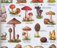 Giftige Pilze Im Garten Schön Pin Von Midori Oni Auf РИСОВАНИЕ In 2020 Mit Bildern