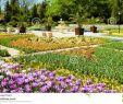Herrenhauser Garten Einzigartig Alley In the Gardens the Balchik Palace Dobrich Province