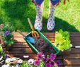 Holz Gartendeko Selber Machen Best Of Lieb Markt Gartenkatalog 2017 by Lieb issuu