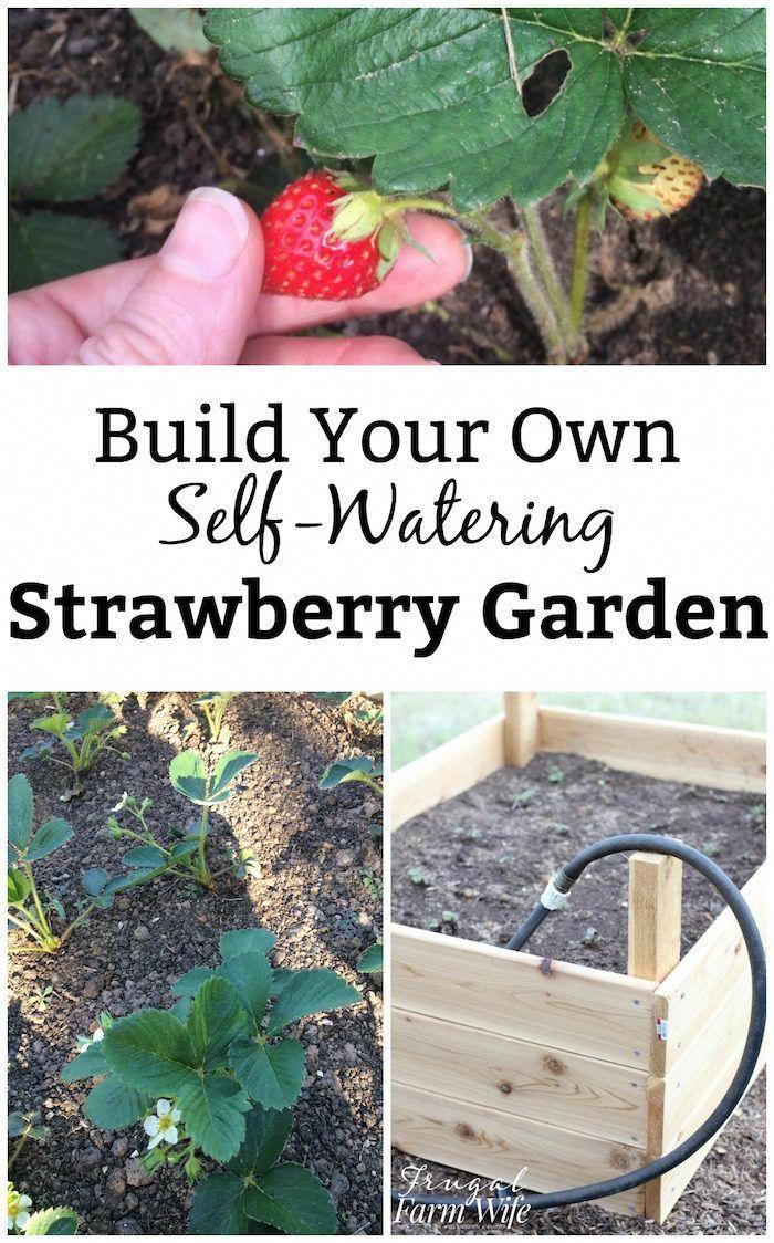 So bauen Sie Ihr eigenes Gartenbett mit Bewässerung unterbewässerter Garten diy buildyourownaquaponicssystem