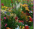 Hotel Garten Bonn Best Of 2385 Best Gardens Images In 2020