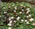 Hotel Garten Bonn Inspirierend Botanical Garden Bonn 2020 All You Need to Know before