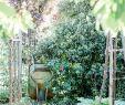 Ingwer Im Garten Neu Ein Gemüsegarten Auf Einem Quadratmeter Square Foot