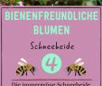 Insektenfreundlicher Garten Genial Bienenfreundliche Blumen 15 Blumen Brummer Lieben