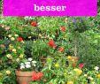 Insektenfreundlicher Garten Genial Die 52 Besten Bilder Von Blumengarten In 2020