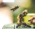 Insektenfreundlicher Garten Inspirierend Die 61 Besten Bilder Von Preis ☆ Ab In Den Garten