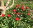 Insektenfreundlicher Garten Neu Die 52 Besten Bilder Von Blumengarten In 2020