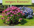 Insektenfreundlicher Garten Neu Welche Pflanzen Mögen Bienen Tipps Für Bienenweiden Und Co