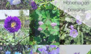 73 Inspirierend Insektenfreundlicher Garten