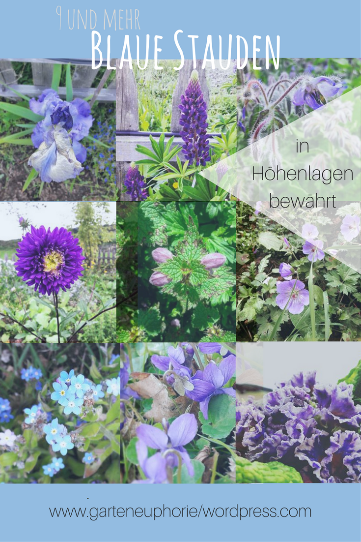 Insektenfreundlicher Garten Schön 9 & Mehr Blaue Stauden – Blaues Wunder Im Garten Auf 850 Hm