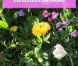 Insektenfreundlicher Garten Schön Die 52 Besten Bilder Von Blumengarten In 2020