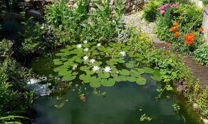 59 Best Of Japanischer Garten Anlegen & Gestalten