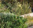 Japanischer Garten München Elegant Clifftop Garden