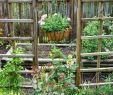 Kleine Gärten Gartenideen Einzigartig 252 Best Garden Scenes Images