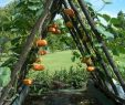Kleine Gärten Gartenideen Elegant 145 Best 1920s Bungalow Garden Images In 2020