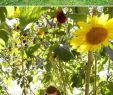 Kleine Gärten Gartenideen Genial 136 Best Gardening Ideas Images In 2020