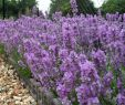 Kleine Gärten Gartenideen Inspirierend 102 Best Olive Images