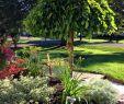 Kleine Gärten Gartenideen Neu Umbrella Tree