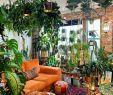 Kleine Gärten Gestalten Best Of 149 Best Plant Party Images In 2020