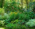 Kleiner Garten Ohne Rasen Genial Clevere Tipps Für Den Kleinen Garten Layer Immobilien