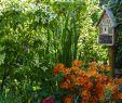 Kleiner Garten Ohne Rasen Neu Kleine Gärten Gestalten Polia Imperial Feng Shui Bazi