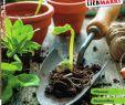 Kreative Ideen Gartendeko Holz Luxus Gartenkatalog 2020 by Lieb issuu