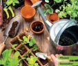 Kreative Ideen Gartendeko Holz Schön Gartenkatalog 2019 by Lieb issuu