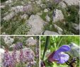 Leipzig Botanischer Garten Neu A Mediterranean Medicinal Plant In the Continental Balkans