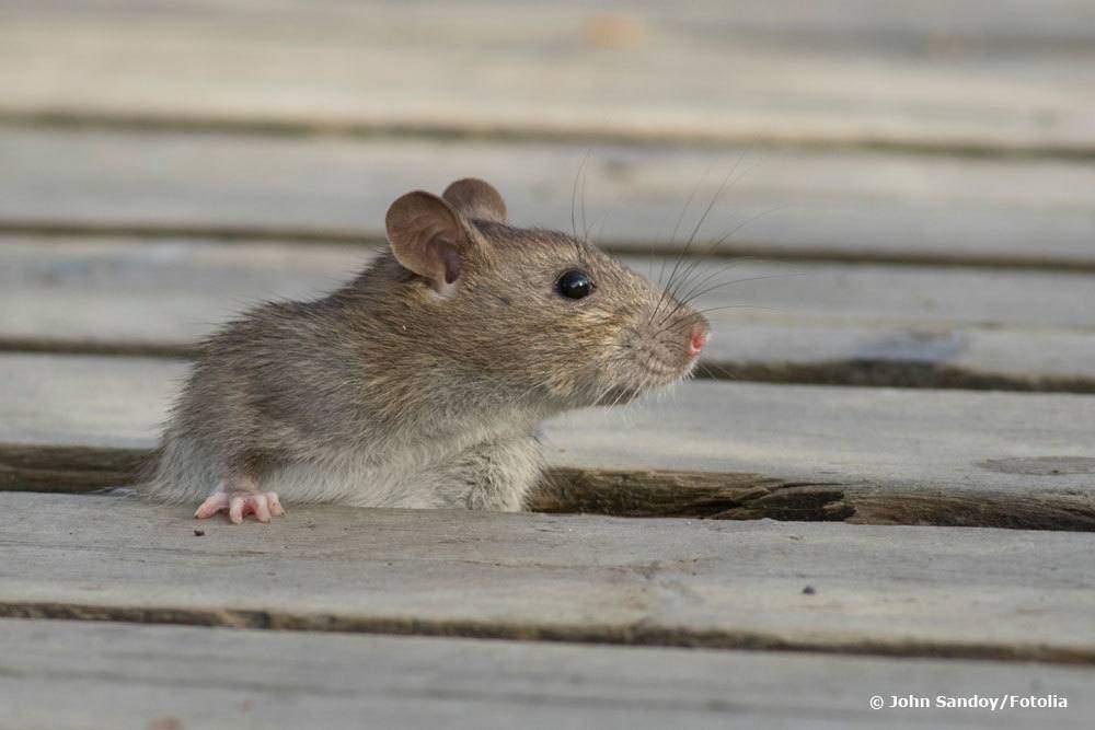 Löcher Im Garten Ratten Einzigartig 39 Inspirierend Löcher Im Garten Ratten Elegant