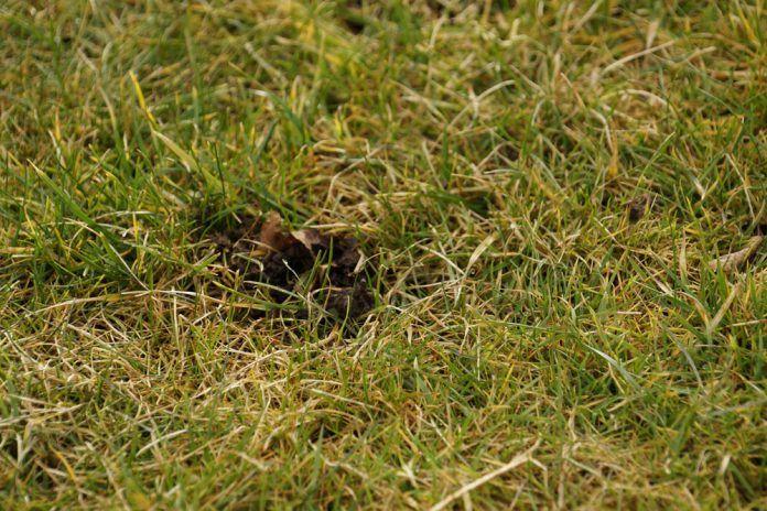 Löcher Im Garten Ratten Einzigartig Kleine Löcher Im Rasen Welches Tier War Es