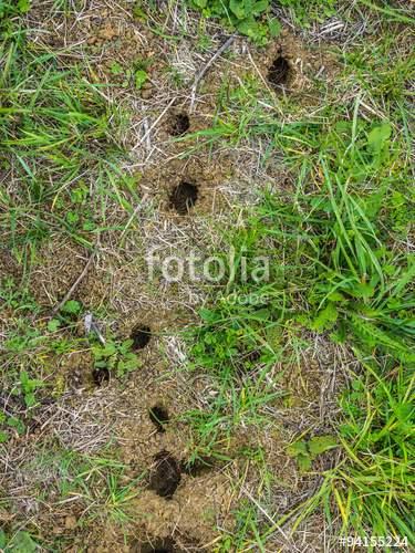 Löcher Im Garten Ratten Frisch 39 Inspirierend Löcher Im Garten Ratten Elegant