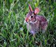 Löcher Im Garten Ratten Genial Löcher Im Rasen Im Garten Oder In Der Erde Welches Tier