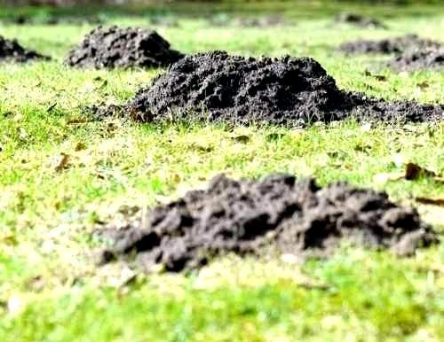 Löcher Im Garten Ratten Inspirierend 39 Inspirierend Löcher Im Garten Ratten Elegant