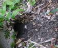 Löcher Im Garten Ratten Inspirierend Im Garten Löcher Ratten