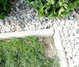 Löcher Im Garten Ratten Inspirierend Ratten Im Garten Und Hunde Dazu sonstiger Talk Rund
