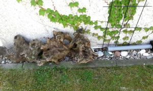 60 Genial Löcher Im Garten Ratten