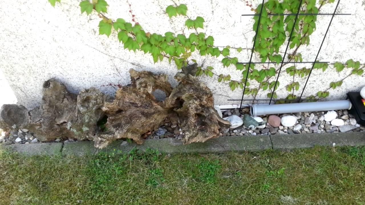Löcher Im Garten Ratten Inspirierend Ratten Im Garten