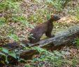 Löcher Im Garten Ratten Luxus Marderbau Im Garten Erkennen