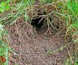 Löcher Im Garten Ratten Schön Garten Stilvoll Rattenlöcher Im Garten Innerhalb Anlocken