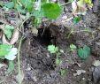 Löcher Im Garten Ratten Schön Loch Im Beet Was Wohnt Da Garten Gartenforum