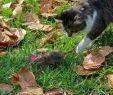 Löcher Im Garten Ratten Schön Ratten Im Garten & Kompost Vertreiben Tipps Zur Bekämpfung