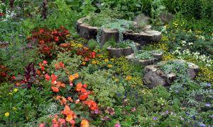 23 Frisch Mein Schöner Garten Gartenplaner