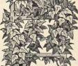 My Garden Gardena Elegant 7 50 –s Stock S & 7 50 –s Stock Alamy