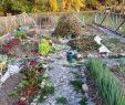 My Garden Gardena Schön 618 Best Gardenlife Images