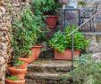 Natursteintreppe Garten Inspirierend Haustreppe Mit Pflanzen Geschmückt Stockfotos & Haustreppe