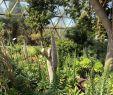Pavillion Garten Best Of Botanical Garden Dusseldorf 2020 All You Need to Know