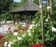 Pavillon Garten Neu File Augsburg Bot Garten Am Rosenpavillon Wikimedia
