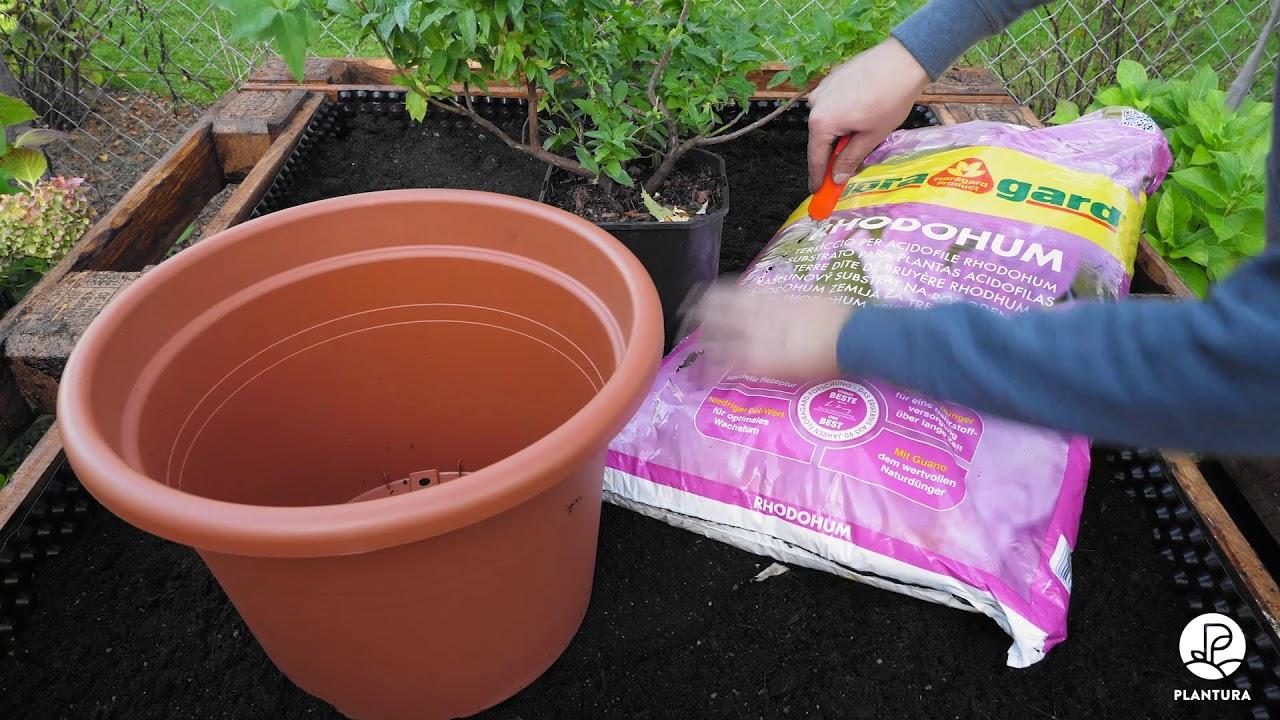 Permakultur Garten Anleitung Best Of Hochbeet Aus Europaletten Selber Bauen Floragard Tutorial